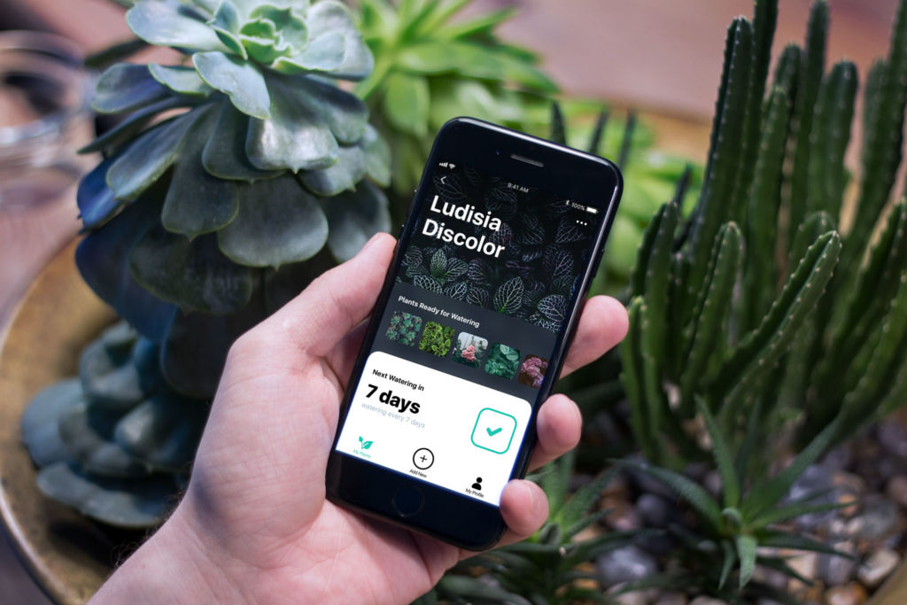 watering tracker app design tubik